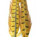 Paire de plumes de faisan golden olive-39