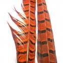 Paire de plumes de faisan orange-02