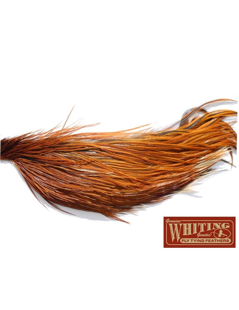 1/2 cou de coq Whiting Bronze ROUX