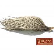 1/2 cou Whiting bronze gris tacheté