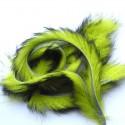 Bandelettes lapin chartreuse noir