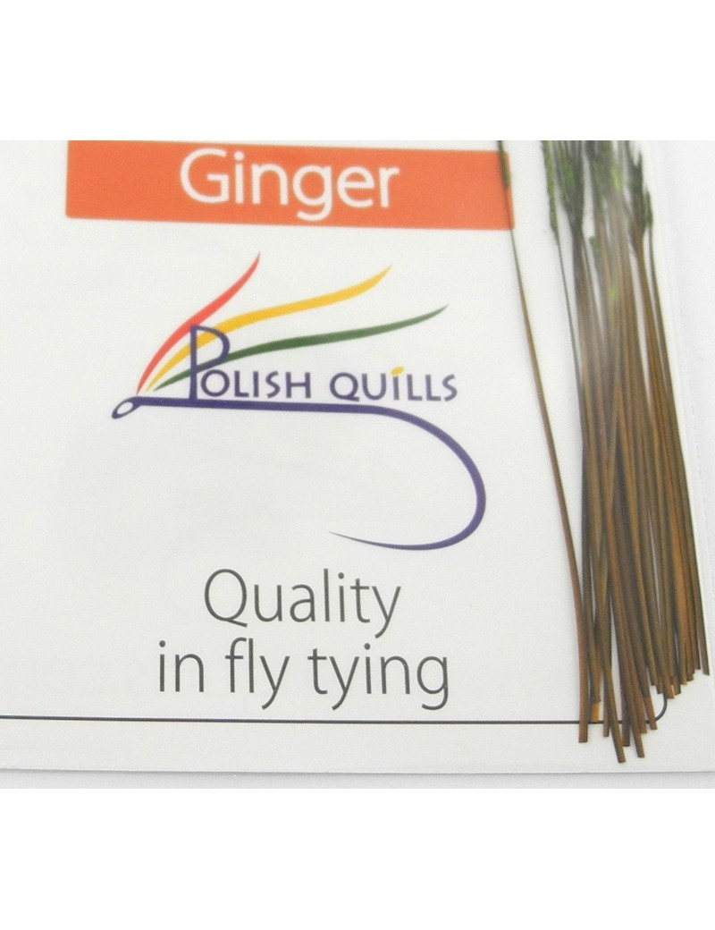 Polish quill ginger