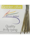Polish quill golden olive