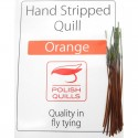 Polish quill orange