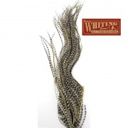 1/4 de lancette WHITING grizzly variant