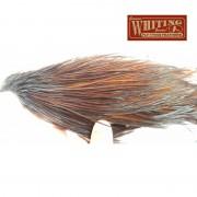 1/2 cou de coq Whiting bronze coachman brown