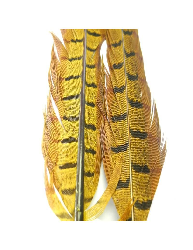 Paire de plumes de faisan golden olive-29