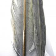 Paire de plumes de faisan gris-15