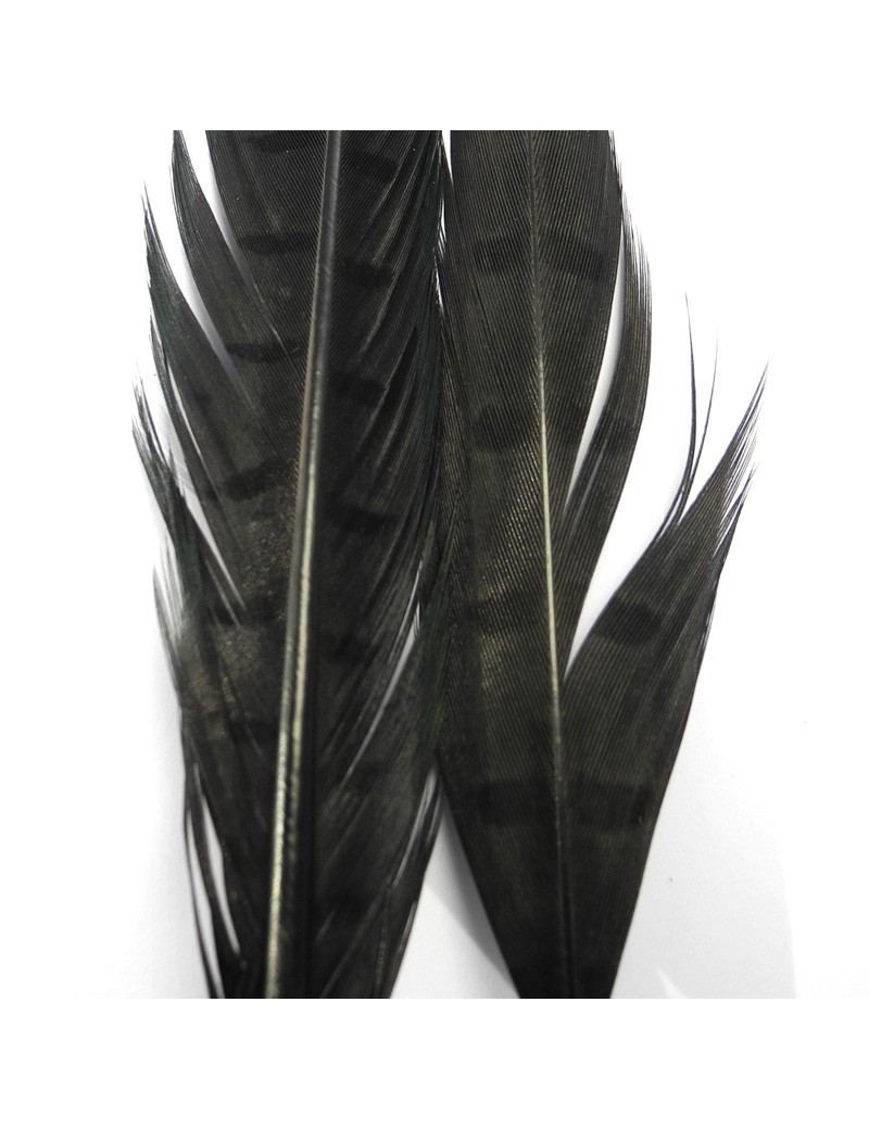 Paire de plumes de faisan noir-30