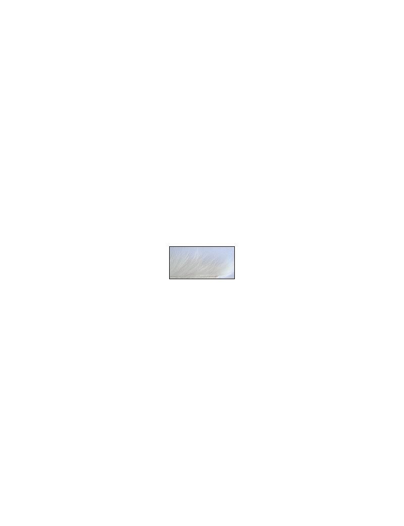 Bandelettes lapin Blanc-01