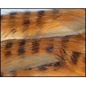 Bandelettes lapin zébrées tan-orange