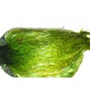 coq Indien TOP grade vert-39