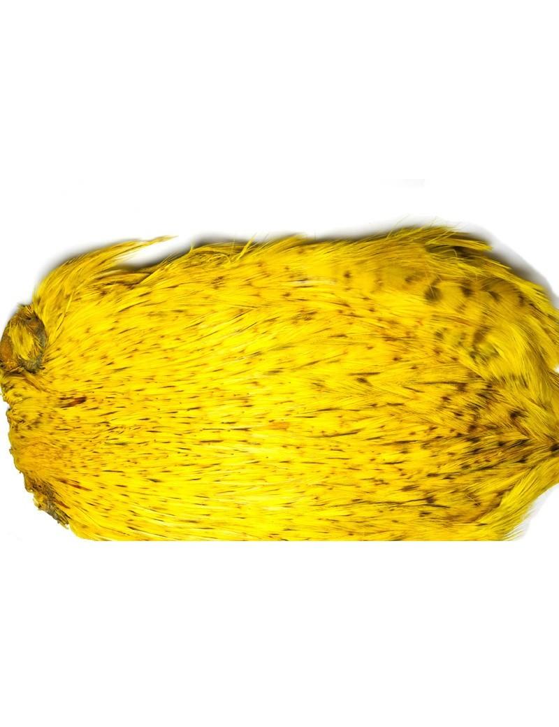 coq Indien TOP grade jaune-306