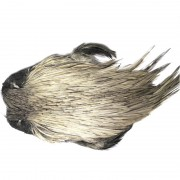 coq Indien TOP grade gris-15