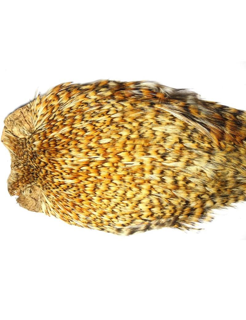 coq Indien TOP grade chinchilla-roux-351