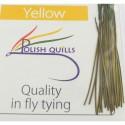 Polish quill jaune