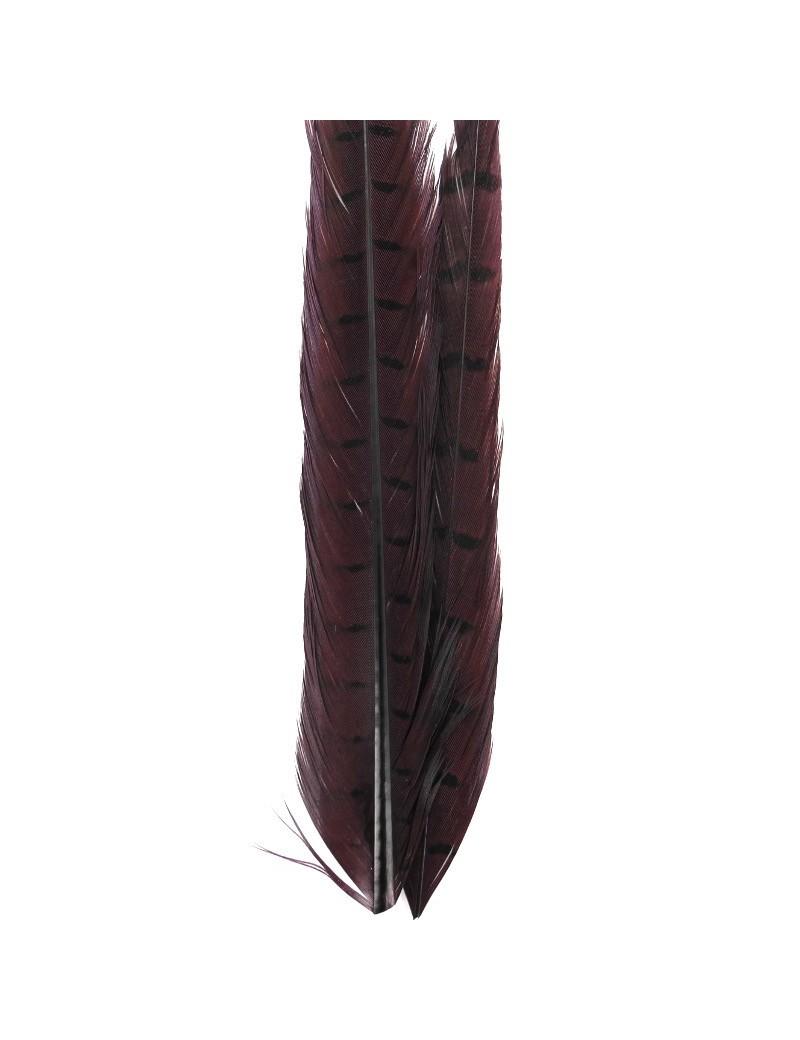 Paire de plumes de faisan lie de vin-17