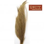 1/2 cou de coq Whiting Bronze GRIS MOYEN