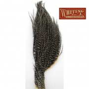1/2 cou de coq Whiting grizzly variant