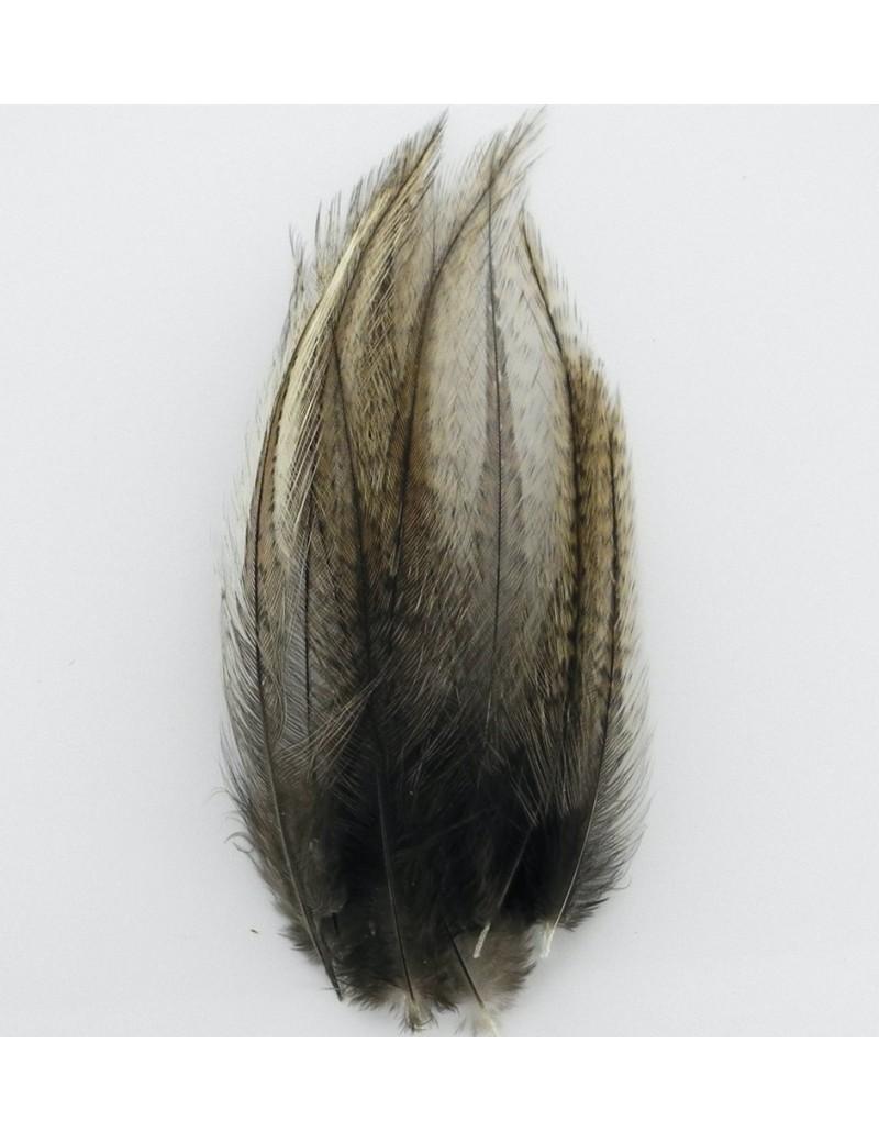 Plumes lancettes Pardo gris brun moyen