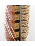 Paire de lances de faisan Naturel