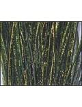 Herl de paon Vert