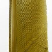 Plume de dinde olive