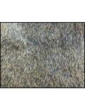 Écureuil gris sur peau