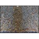 Écureuil gris roux sur peau