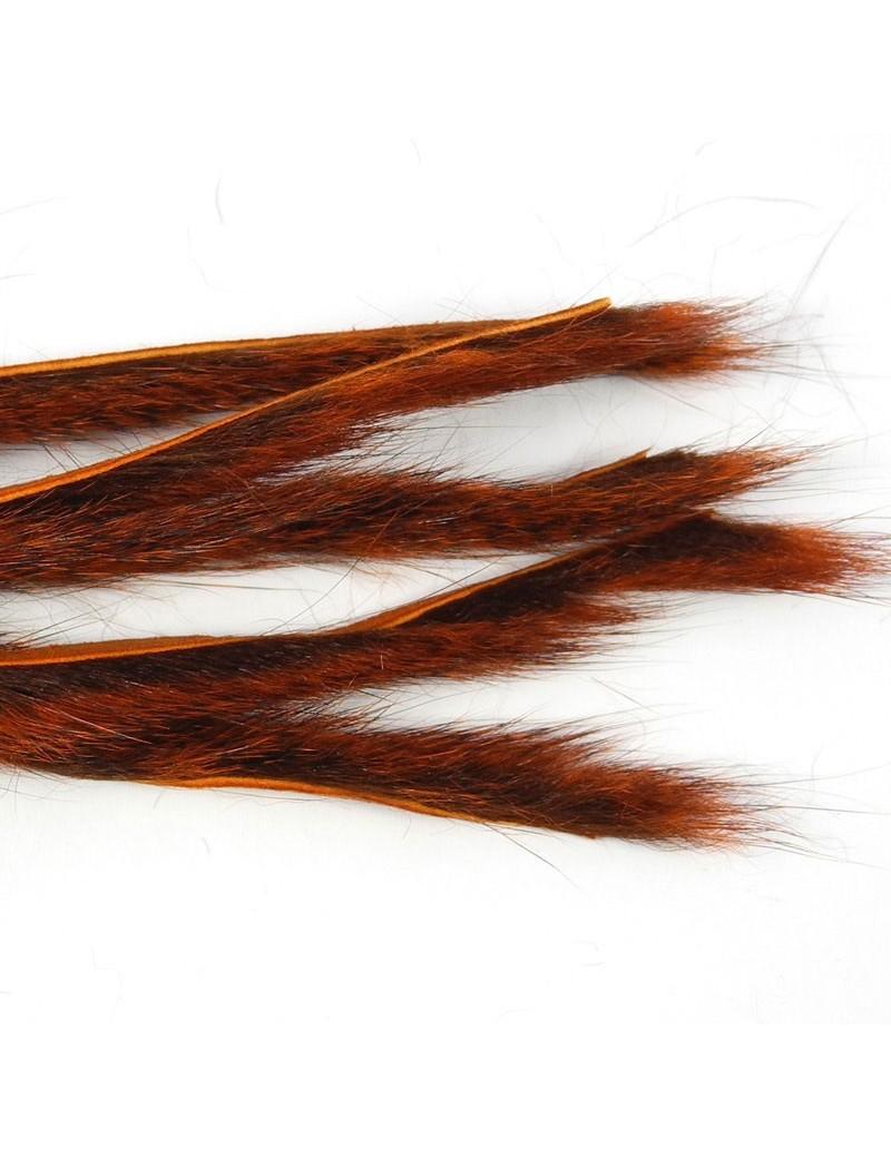 Micro bandelettes d'écureuil Orange
