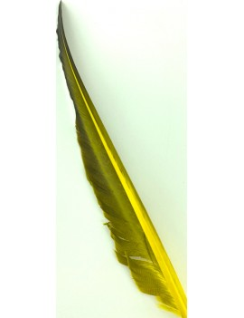 5936_Couleur_Golden olive