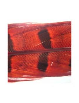 Plume de faisan Rouge-08