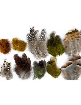 Assortiment de plumes diverses
