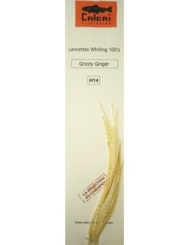 Lancettes Whiting 100'S Grizzly Ginger