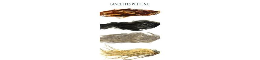 Cous-Lancettes Whiting/Coq Pardo